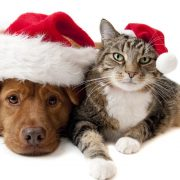 peace-dog-and-cat-christmas-wallpaper-free