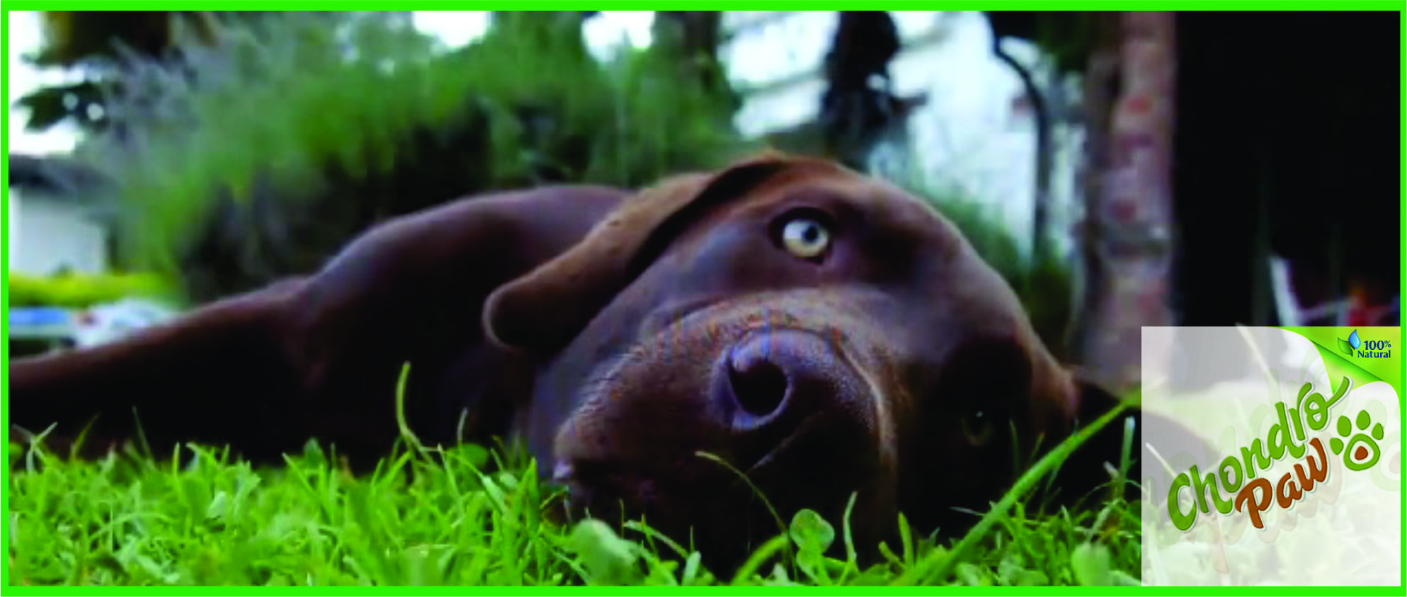 treating-dogs-and-cats-with-arthritis-hip-and-mobility-problems-2