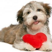 Heart problems in dogs