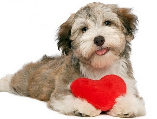 Low Sodium Food For Dogs With Heart Problems