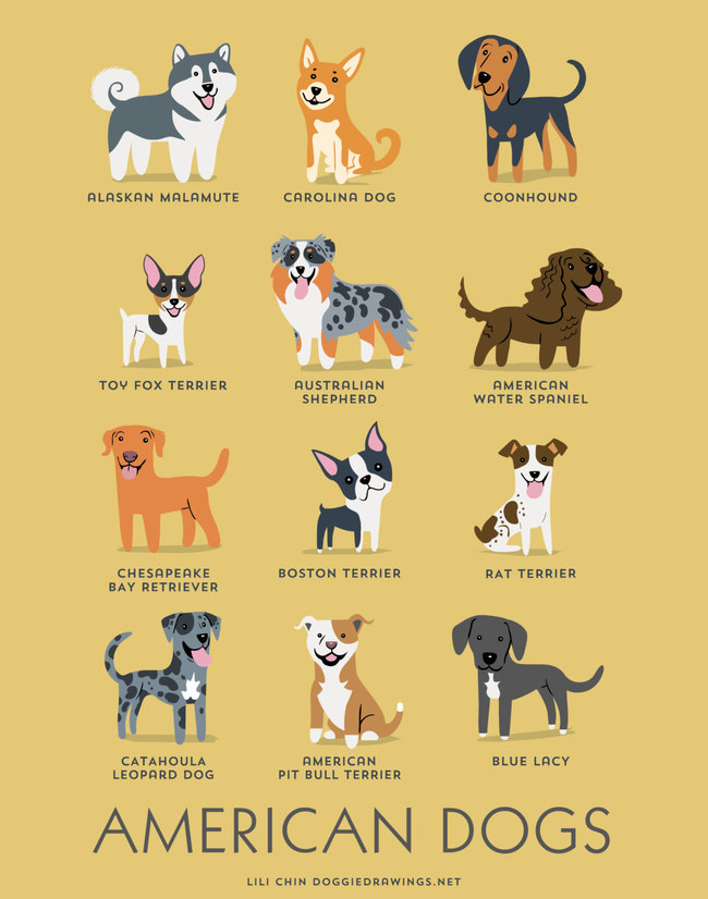 American dogs in adorable illustrations
