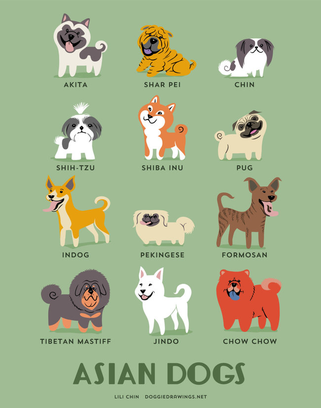 Asian dogs in adorable illustrations