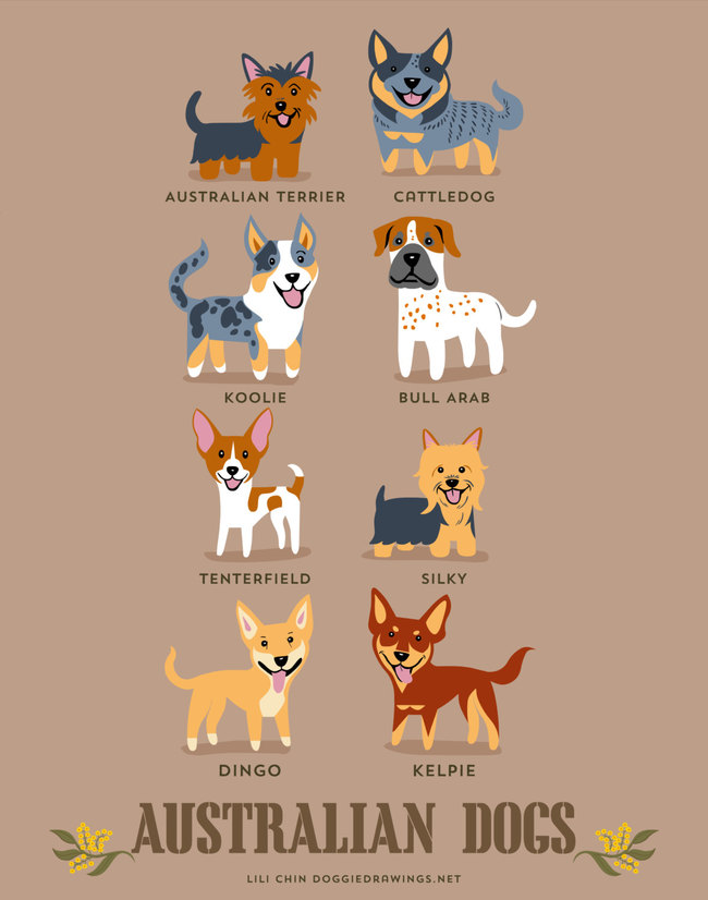 Australian dog in adorable illustrations