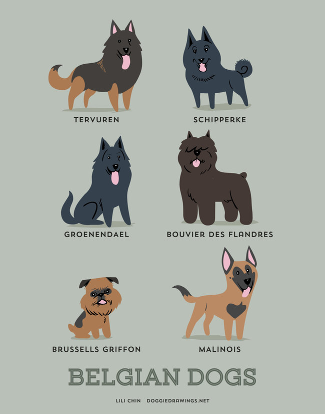 Belgian dogs in adorable illustrations