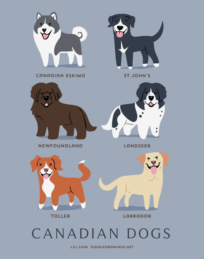 Canadian dogs in adorable illustrations