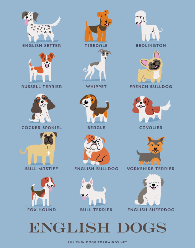 English dogs in adorable illustrations