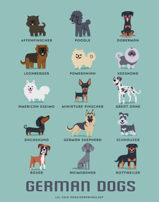 German dogs in adorable illustrations