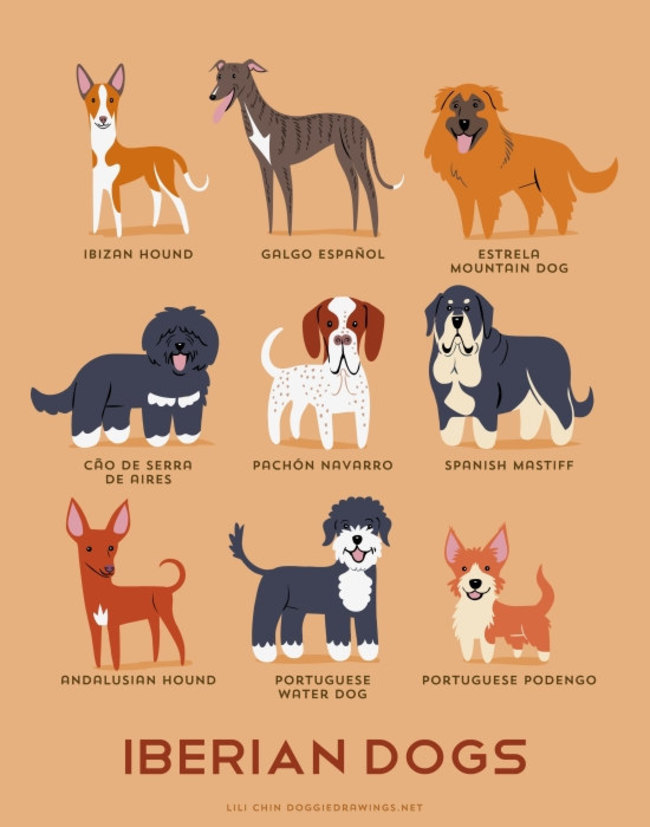 Iberian dogs in adorable illustrations