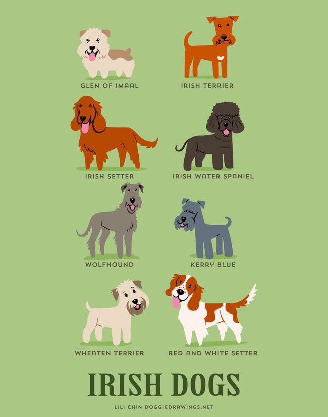 Irish dogs in adorable illustrations