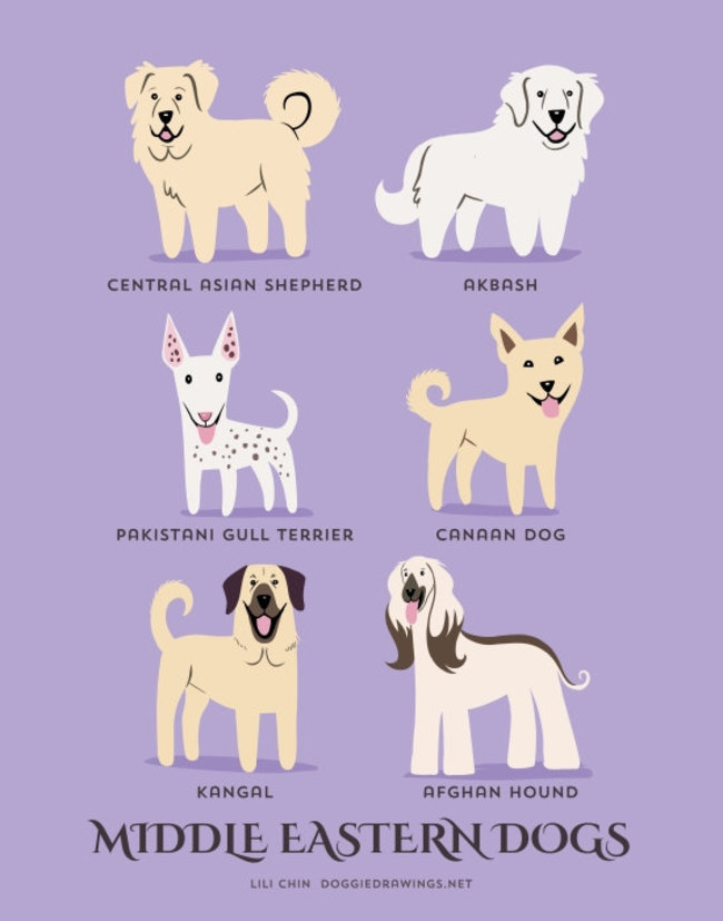 Middle Eastern dogs in adorable illustrations