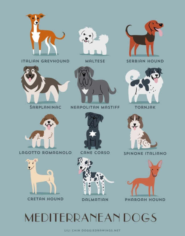Mediterranean dogs in adorable illustrations
