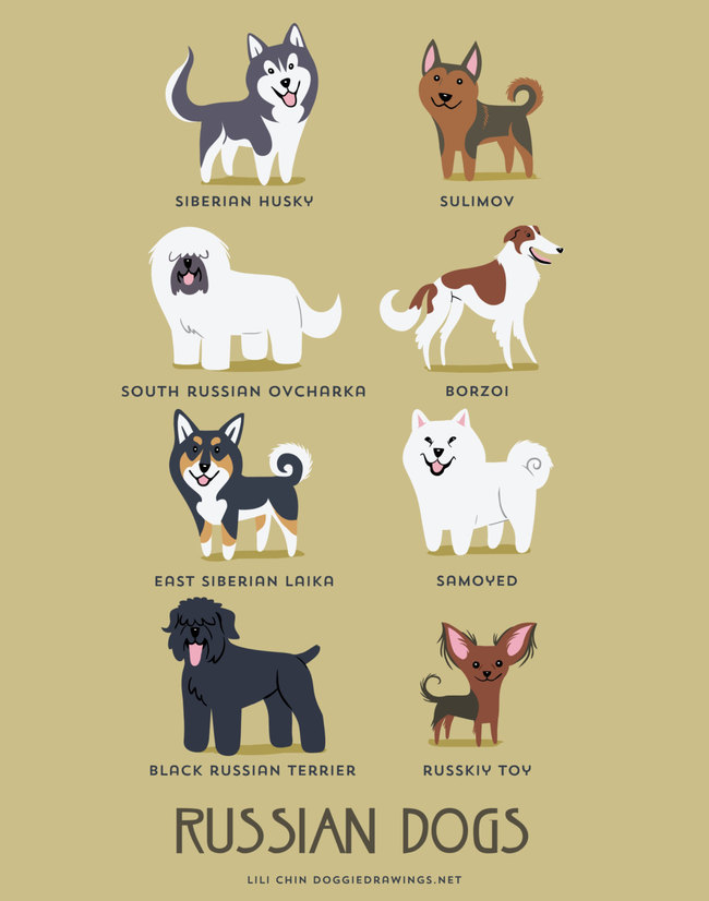 Russian dogs in adorable illustrations