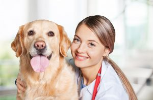 REDUCING DOG'S STRESS DURING VISITS TO THE VET