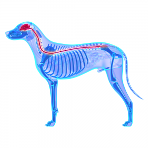 Dog analgesic for Arthritis