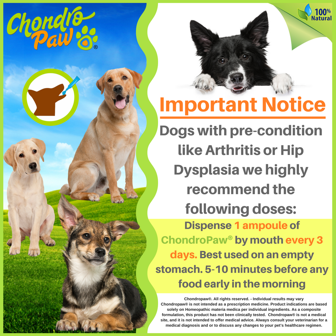 CHONDROPAW IMPORTANT NOTICE OF DOSES