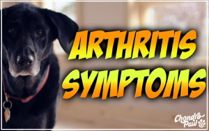 Senior dog arthritis symptoms