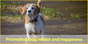 Natural Remedies for Arthritis in Old Dogs