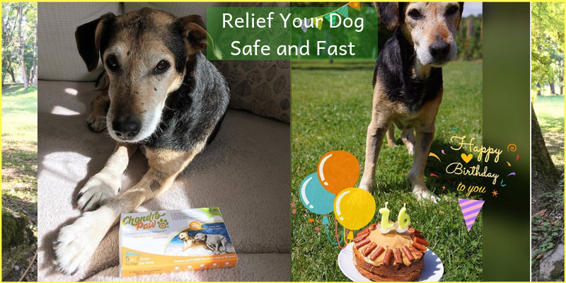 Relief your Dog Pain Naturally