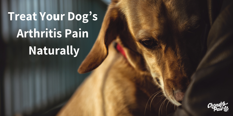 Treat Your Dog's Arthritis Pain Naturally