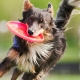 supplements for dogs, arthritis supplements for dog,