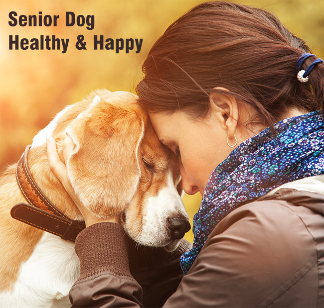 senior dog healthy and happy